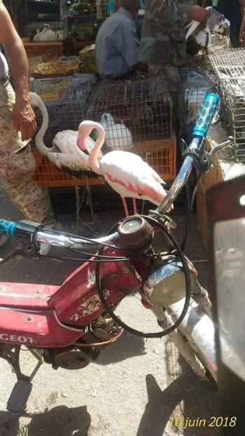 Lutte contre le commerce illégal de la faune sauvage en Tunisie